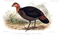 Annales des sciences naturelles (1881) (18204839675).jpg