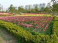 Ansan Lake Park Spring 2015 18.JPG