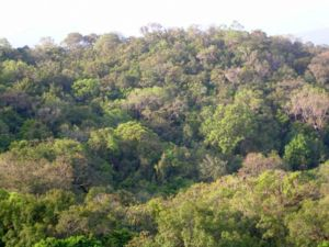 Kali Tiger Reserve - Anshi National Park forest canopy