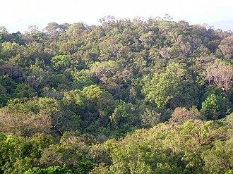 Kali Tiger Reserve - Anshi National Park forest canopy