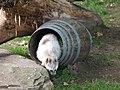 Antwerp Zoo (9694405506).jpg