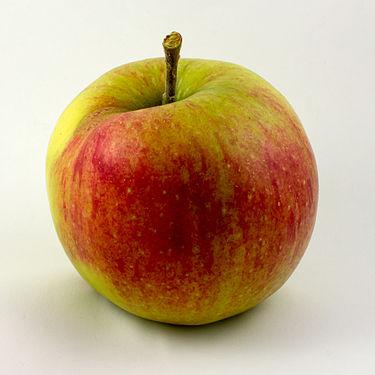 Apfel-Jonagold.jpg