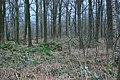 Appelse Ringwalburg (30869895191).jpg