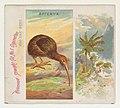 Apteryx, from Birds of the Tropics series (N38) for Allen & Ginter Cigarettes MET DP839012.jpg