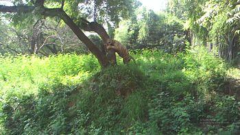 Apurvgupta zoo.jpg