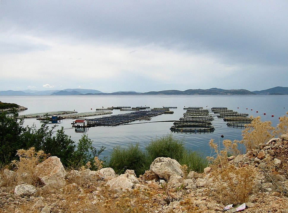 Aquaculture Western Greece 2004