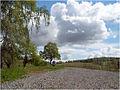 Arboretum w Wojsławicach, 2005, 005.jpg