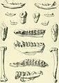 Archives du Mus©um d'histoire naturelle de Lyon (1899) (20138528858).jpg