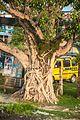 Art of root.jpg