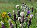 Artenvielfalt im LSG Oldhorster Moor 12.jpg