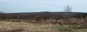 Ashdown Forest - King's Standing, Ashdown Forest