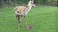 Assiniboine Park Zoo, Winnipeg (480513) (9447833446).jpg