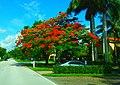 At The Tree Shadow. - panoramio.jpg