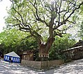 Atsuta jingu shrine , 熱田神宮 - panoramio (2).jpg