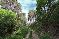 Auronzo di Cadore - trail 2.jpg