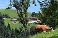 Austrian countryside (20620947348).jpg