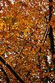 Autumn (4671150303).jpg