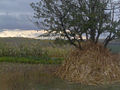 Autumn - 78 (2009). (15917261923).jpg