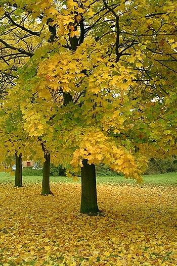 English: Autumn Colours