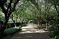 Avenue path Avenue bench Capel Manor Enfield London England.jpg