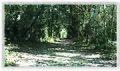BALNEÁRIO CAMBORIÚ (Parque Ambiental), Santa Catarina, Brasil by Maria de Lourdes Dalcomuni (Ude) - panoramio (4).jpg
