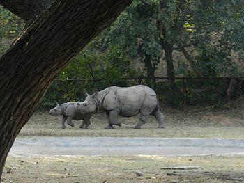 Baby and Mommy Rhinos.jpg