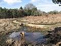 Backley Bottom - geograph.org.uk - 732282.jpg