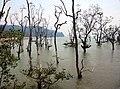 Bako mangrove01.jpg