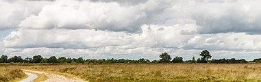 Balloërveld, natuurgebied in Drenthe 005.jpg