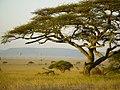 Ballonvaren over de Serengeti (6693818375).jpg
