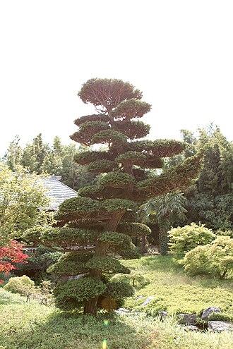 Cloud tree - Image: Bambouseraie de Prafrance 20100904 071