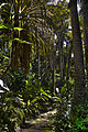 Barbados walk (6840544854).jpg