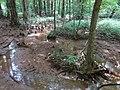 Battle Creek Cypress Swamp 29.jpg