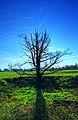 Baum - panoramio (7).jpg