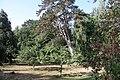Baumbestand im Park des Rittergutes Groß-Vahlberg.jpg
