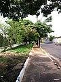 Bauru - SP - panoramio (37).jpg