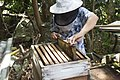 Beekeeper Seychelles.jpg