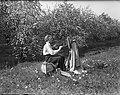 Beemster in bloei, Bestanddeelnr 902-1596.jpg