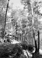 Befestigungsanlagen im Wald - CH-BAR - 3238684.tif