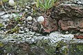 Begroeiing en slak op Fort Napoleon te Oostende - 369117 - onroerenderfgoed.jpg