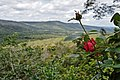 Beleza natural - Chapada Diamantina.jpg