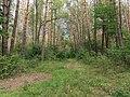 Berkovets forest1.jpg