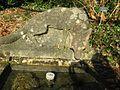 Berne botanic garden Stonefox.jpg