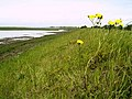 Beside the Tidal Lagoon near Paull - geograph.org.uk - 439420.jpg