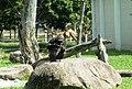 Beto Carrero Zoo - panoramio (5).jpg