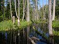 Białowieża National Park, Poland (4663906547).jpg
