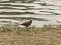 Bird by the lake.jpg