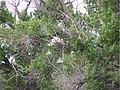 Birds of Blaine County - riparian point count surveys 2005 (2006) (16663348402).jpg