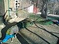 Bitola Zoo Peafowls.JPG