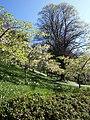 Blossom, Coleton Fishacre - geograph.org.uk - 1266682.jpg